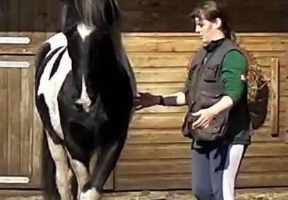 Tranining in Handling  & Equine Behaviour